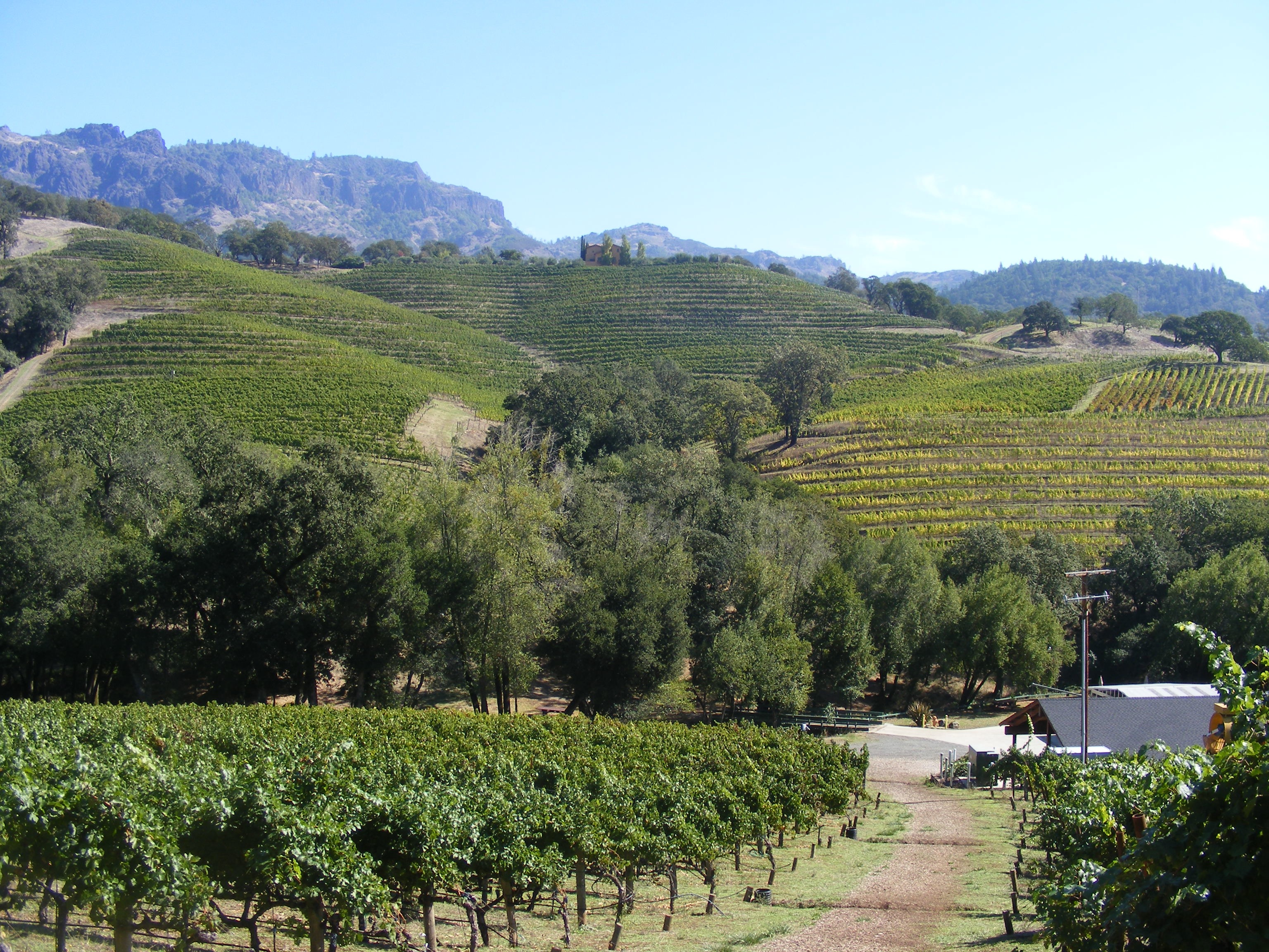 View of vineyards and rolling hills in Kenwood, CA