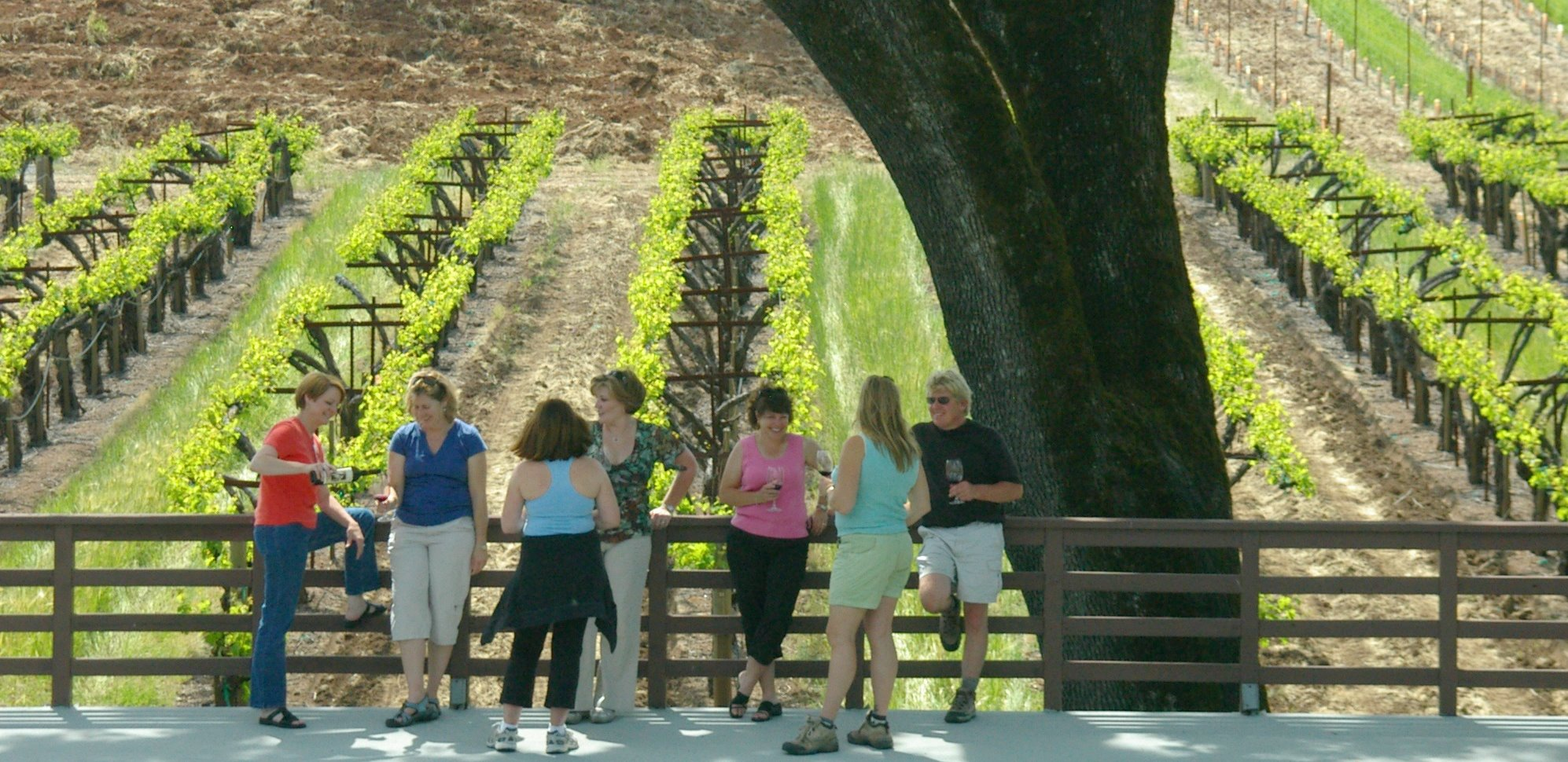 Group of people enjoying wine tasting in vineyard in Sonoma