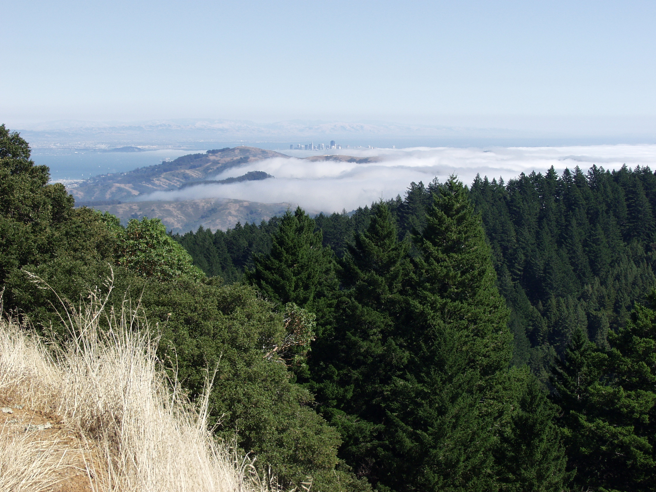 View of the fog in San Francisco from Mount Tamalpais