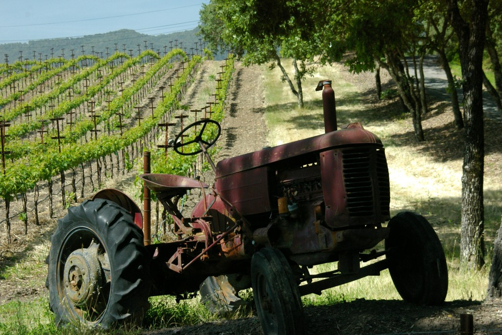Old Tractor in a vineyard in Sonoma Wine Country