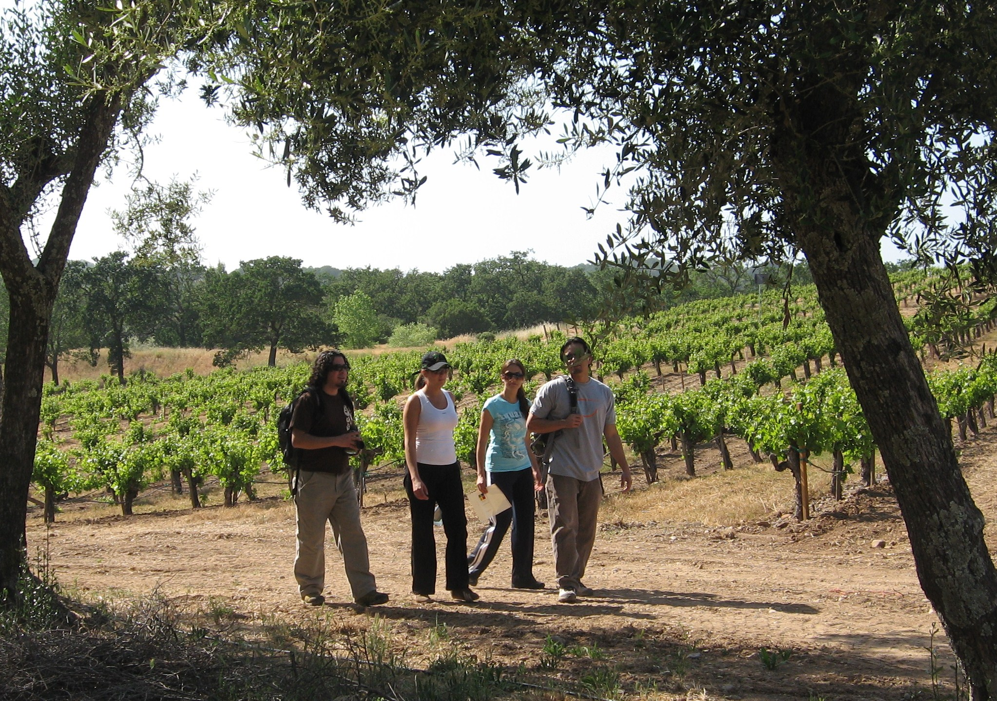 Group treks through vineyard on Wine Country Vacation