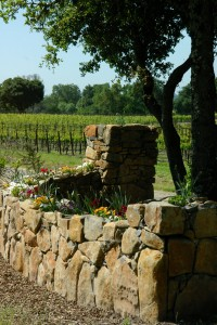 A Sonoma Valley vineyard with a rock wall and flowers